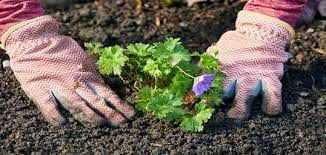 get planting and help the environment