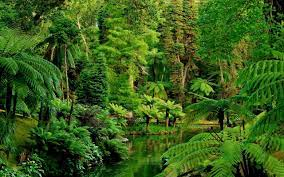 Forest Green Aesthetic Wallpaper ...