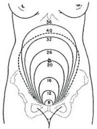 Uterus Measurement Chart During Pregnancy Antenatal Care Module 7 Physiological Changes During