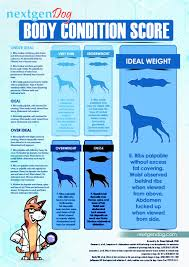 Malnutrition In Dogs What Pet Owners Must Know Top Dog Tips