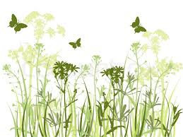 Grass and flowers background Transparent Colourbox Background With Green Grass Camomile Stock Vector Colourbox