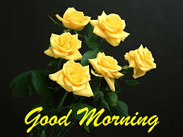 good morning wishes with bunch of yellow roses hd desktop wallpapers