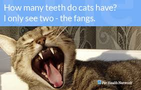 Kitten Teeth Chart Dr Ernies Top 10 Cat Dental Questions And His Answers