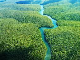 Природные ресурсы Бразилии Бразилия является одним из лидеров по количеству запасов лесных ресурсов уступая первую строчку лишь России Экваториальные влажные леса составляют