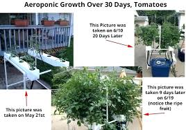 tower garden reviews garden tower review this is the growth that you can expect from a
