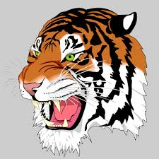 tiger face growling drawing. Brilliant Drawing Growling Tiger Rrrrr Emergent Literacy Lesson In Face Drawing W