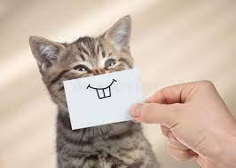 Gato Divertido Con Sonrisa En La Cartulina Que Se Sienta Cerca De La Comida Foto de archivo - Imagen de papel, plato: 110607508