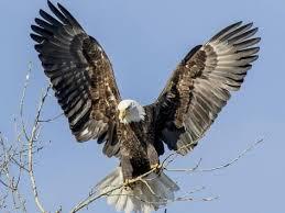 Znalezione obrazy dla zapytania wings