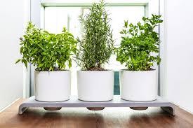 Self-Watering Herb Pots