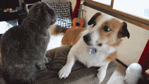 dog and cat friends gif. Simple And Cutegifcatplayingdogcouch For Dog And Cat Friends Gif R