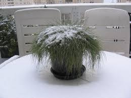Terras En Balkon Groen In De Winter Hobbyblogonl