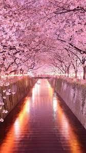 Iphone Flower Beautiful Wallpaper Hd