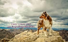 Tiere Gehen über Die Regenbogenbrücke Home Facebook