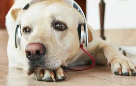 <b>Music</b> helps <b>dogs</b> chill out, especially if it's reggae or soft rock - The ...