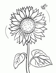 Small Picture sunflower coloring page PHOTO 325435 Gianfredanet