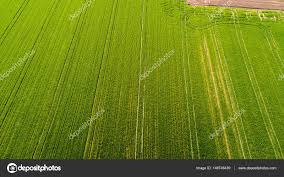 grass field aerial. Nature And Landscape: Aerial View Of A Field, Cultivation, Green Grass, Countryside Grass Field