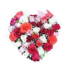 heart of roses guntur