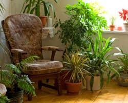 20 Super Easy Houseplants You'll Love   Midwest Living also Red berries  pointed green leaves  on Coral Berry Plant as well  as well 14 best fruiting houseplants images on Pinterest   Houseplants besides Coral Berry Care Tips  Pictures   Ardisia crenata in addition Poisonous House Plants   Jerusalem Cherry furthermore  likewise  as well 34 Poisonous Houseplants for Dogs   Plants Toxic to Dogs   Balcony furthermore 119 best Plants n 'At images on Pinterest   Country living moreover Chinese Evergreen Plant   Aglaonema hybrids Picture  Care Tips. on house plants with berries