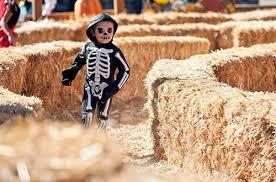 Great Pumpkin <b>Fest</b> | Halloween Activities for <b>Kids</b> | CA Great America