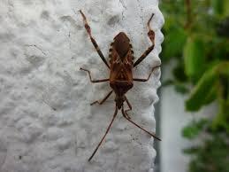 Insekten Wanzen Im Haus So Wird Man Die Stinkekäfer Wieder Los