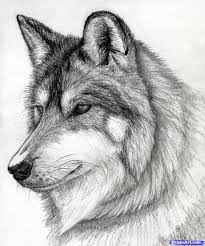 Drawn Wolf How To Draw A Wolf Head Mexican Wolf Step 15 Drawing Ideas