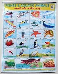 Details About India School Chart Poster Print Fishes Aquatic Animals Ct68