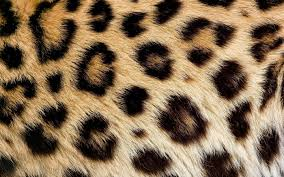 wild animal print wallpaper.  Print Leopard Fur Widescreen   Wide S Net Wild Animal  Print Inside Wallpaper