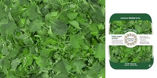 how to grow arugula from seeds indoors rug designs