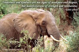 Elephant Photo Quoto