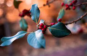 Wallpaper red, nature, leaves, macro ...