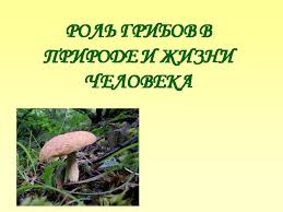 Презентация на тему Роль грибов в природе и жизни человека по  Презентация на тему Роль грибов в природе и жизни человека