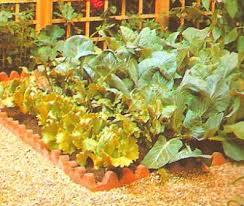 raised garden design vegetable bed