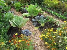 Kale Companion Planting Chart Incompatible Plants 20 Plants What They Cant Grow With