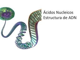 Material genético ADN ARN