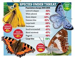 decline in numbers recorded out of butterfly species daily the annual uk butterfly monitoring scheme revealed some shocking results
