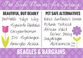 pet safe flowers for spring