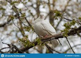 Light Brown And White Pigeon White Pigeon Dove Beautiful Pigeon Close Up City Birds