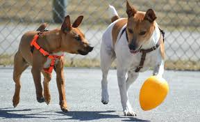 Jolly Ball For Dogs Experts Advice And Top Product Picks