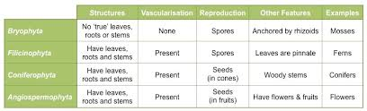 Animal Phyla Comparison Chart Plant Phyla Bioninja