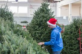 Forestry Club\u0027s 2018 Christmas tree sale set for Nov. 30 \u2013 Dec. 2