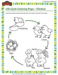 Small Picture Life Cycle Coloring Page Chicken 1st Grade Life Science
