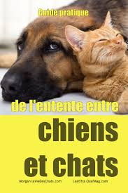chat en solitaire rencontre