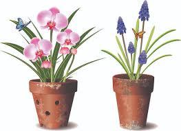 orchids flower pot