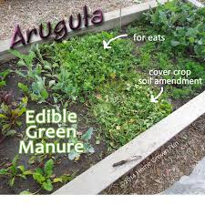 garden greens. Using Edible Cover Crops And Green Manures In The Home Garden Greens