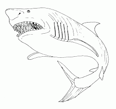 Dessin Colorier Requin Scie A Imprimerl