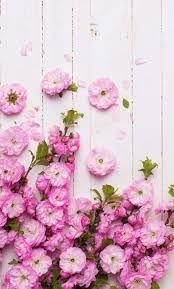 Pink Flower Wallpaper Iphone Pink Roses ...