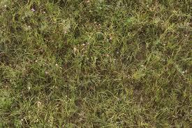 Dirt grass texture seamless High Resolution Similar Textures Texturematecom Grass Textures Texturematecom