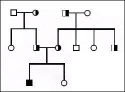 Pedigree Analysis Biol110summertest Confluence