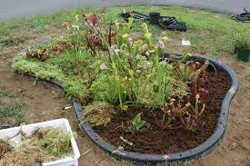 peat moss for garden 7 720x480