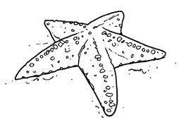 Miglior Collezione Disegni Da Colorare Animali Marini Disegni Da